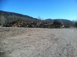 logs prior to cutting 250